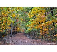 Bench trail Photographic Print