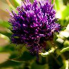 Strange Flower by RichardPhoto
