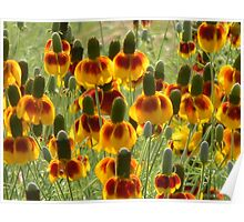 Sunlit Mexican Hat  Poster