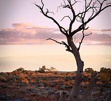 Dead Tree - Silverton by pbclarke