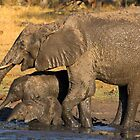 Family matters by Explorations Africa Dan MacKenzie