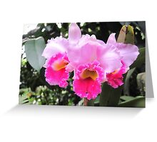 Orchid - Cattleya  Greeting Card