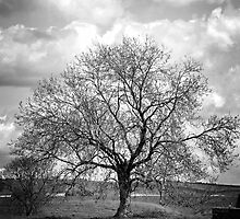 Avebury tree by Karen E Camilleri