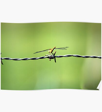 Barbed Dragon Fly Poster