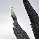Cockatoo on Tree by Maraya Verdonk