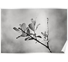 Sunlit Sprig of Leaves in Black and White Poster