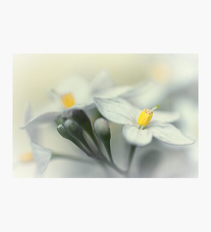 Fading flowers... Photographic Print