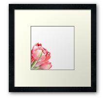 Peony Tulip... (2) Framed Print