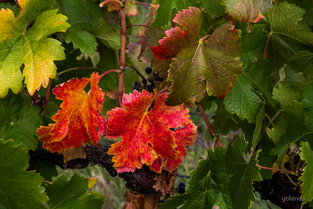 Red and Green Vines by yolanda