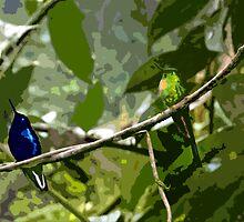 Mindo Hummingbird Duo by Al Bourassa