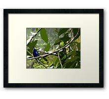 Mindo Hummingbird Duo Framed Print