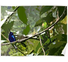 Mindo Hummingbird Duo Poster