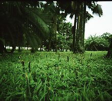 Welcome to the Jungle - Lomo by chylng