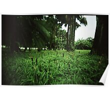 Welcome to the Jungle - Lomo Poster