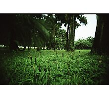 Welcome to the Jungle - Lomo Photographic Print