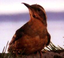 Twin Peaks Bird Sticker