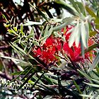 Bottlebrush blooms and berries by ♥⊱ B. Randi Bailey