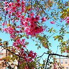 NYC in the Spring by ShellyKay