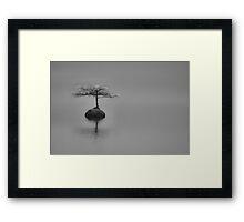 Bonsai Framed Print
