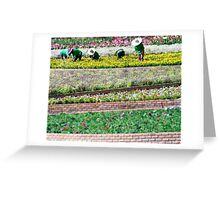 You reap what you sow  Greeting Card