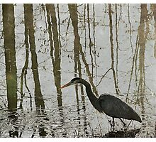 Reflection on the Hunt Photographic Print