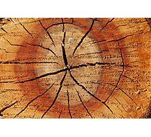 Wooden dark background Photographic Print