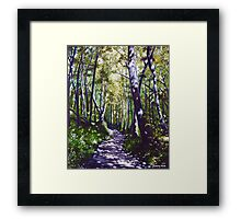 'Summer Woods (Moses Cone State Park, NC)' Framed Print