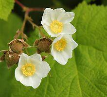 A Trio of Flowers and Young Berries by Wolf Read