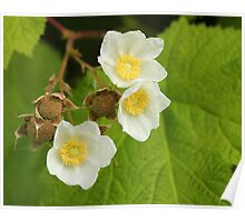 A Trio of Flowers and Young Berries Poster