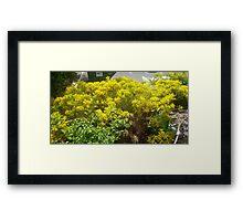bundle od yellow/green on my walks Framed Print