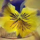 Beautiful Pansy &amp; With Love text by walstraasart