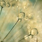 Dandy Drops &amp; Sparkles by Sharon Johnstone