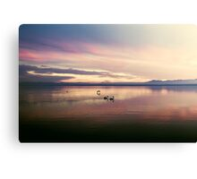 Pelicans on the Salton Sea at Sunset Canvas Print