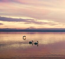 Pelicans on the Salton Sea at Sunset Sticker