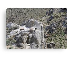 """Sophie on the rocks"",Peterson Mountain,Reno NV USA Canvas Print"