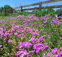 Spring in Dunnellon by AuntDot