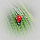lady bug fade by tmwilson