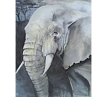 Study of an Elephant Photographic Print