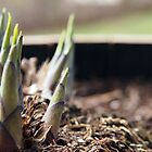 Little Alien World - Emerging Hosta by Linda  Makiej