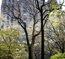 From Central Park 2009 by MisterBphotos