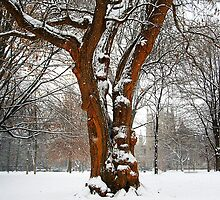 """Central Park in """"Old Louisville"""" - Mystical Tree by MisterBphotos"""