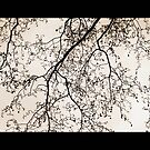 branches- black and white image taken in London by cathyjacobs