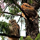 Great Horned Owl &amp; Baby by Larry Trupp