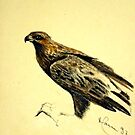 The Hawk by gunnelau