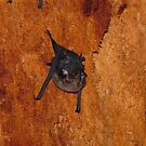 Bat inside a tree by kokitico