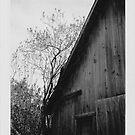 Old Barn by bradydhebert