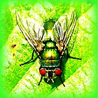 Green Bottle Fly by The Creative Minds