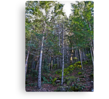 hillside forest Canvas Print