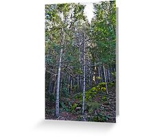 hillside forest Greeting Card
