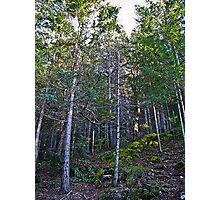 hillside forest Photographic Print